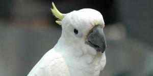 6-alasan-kenapa-memelihara-burung