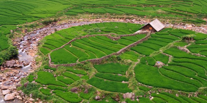indonesia-peringkat-ke-70-di-dunia-bidang-ketahanan-pangan