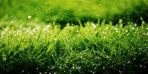 kenapa-aroma-sebelum-dan-sesudah-hujan-berbeda-did-you-know