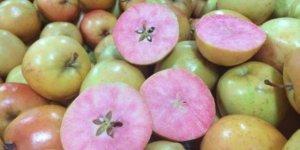 apel merah muda