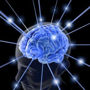 946_tiga_tahap_perkembangan_otak