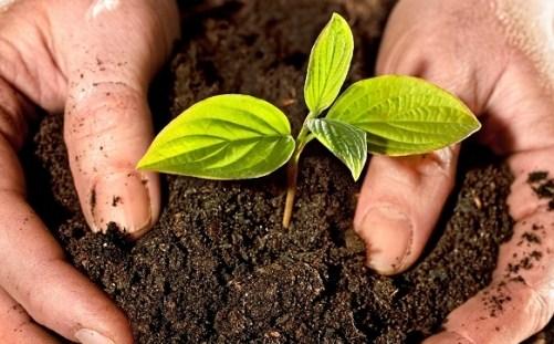 Pentingnya Mengetahui Eh pH EC Pada Tanah