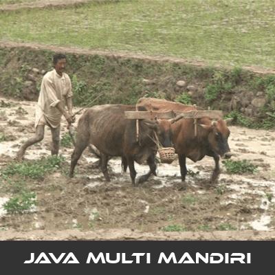 Cara Pengolahan Tanah